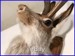Vintage JACKALOPE Wall Shoulder Mount Rabbit with Antlers Plaque Animal Folklore