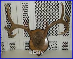 Vintage Mounted Deer Antlers Deer Antlers Rack 8 Point Plaque Wall Taxidermy