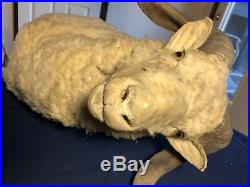 Vintage Ram Sheep Goat Taxidermy Head Wall Mount Rustic Style Scary Plaque